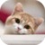 Awesome Cat Wallpapers HD icon