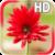 Gerbera Flower LWP icon