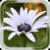 Summer Flower HD LWP icon