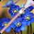 Flower Zipper Lock Screen app for free