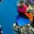 Underwater Sliding Puzzle icon