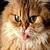 Funny Cute Cats Wallpaper in HD 2014 icon