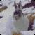 Snow Bunny Live Wallpaper icon