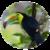 Weird Birds  app for free