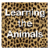 Learning the Animals app for free
