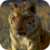 Tiger Resting Live Wallpaper icon