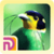 Bird Watching Malaysia app for free