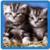 Kittens live Wallpaper  icon