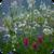 Fresh Spring Flowers Live Wallpaper app for free