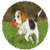 Dog And Toy app for free