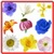Anemone Flowers Onet Classic Game app for free