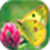 Butterfly Wallpaper_1 icon