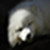 Arctic fox wallpaper app for free