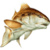 Carnivorous Fish Frenzy app for free