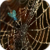 Golden Spider Web Live Wallpaper icon