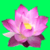 New Lotus flower Tattoo Designs app for free