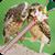 Love Birds Zipper Lock Screen icon