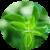 Benefits of Marjoram app for free