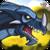 Mountain Dragon Extreme 3D icon