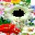 Hd Flower photo frame  icon
