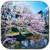 Sakura live wallpper icon