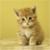 Cutie Cats icon