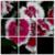 Picture Puzzle  FREE icon