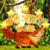 Funny fox app for free