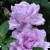 Raining Roses Live Wallpaper app for free