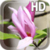 Magnolia Flower LWP app for free