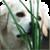 Dog Live Wallpaper HD icon