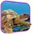 Turtle 3D Live Wallpaper app for free