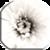 White Live Wallpaper app for free