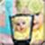 PIp BLEND MAKER APP icon