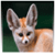 Cutest Animal Facts icon