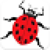 Escape From Beetle icon