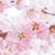 Sakura Live Wallpapers Free icon