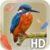 Bird Feathers LWP app for free