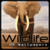 HD Wildlife wallpapers app for free