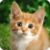 Kitty and Cat Puzzle Tile Jigsaw for Kid and Adult app for free