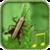 Cricket sounds app icon