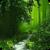 Secret Green Forest Live Wallpaper app for free