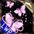 Butterfly Pink Shiny Glitter  A real coloured imag icon