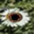 3D Flower photo frames app for free