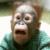 Jigsaw  Puzzle  Crazy  Monkey app for free