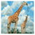 Largest Zoos in the World app for free