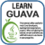 Learn Guava v2 app for free