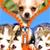 Puppy Zipper Lock Screen Top app for free