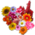 Ultimate Flower Quiz app for free