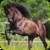 Beautiful wild horses app for free